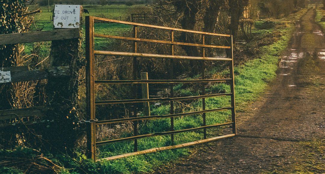metal gate in front of hedge